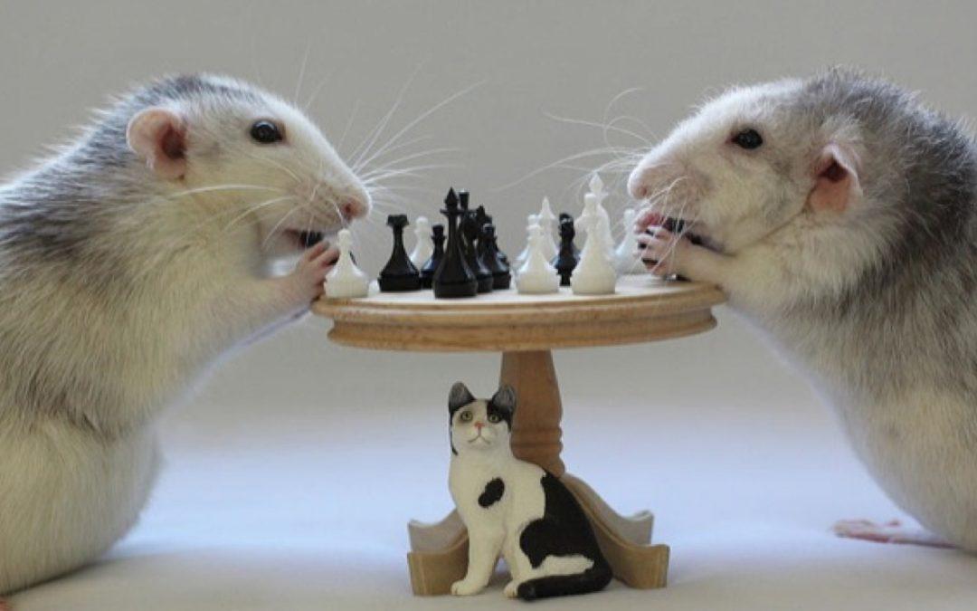 The client mousetrap